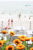 Flowers on the beach, Stock Image