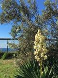 Flowers at the beach bushland Stock Photo