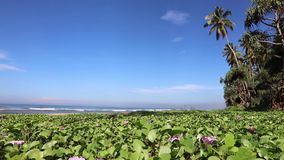 Flowers on the beach. Sun day stock video