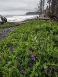 Flowers on beach with surf and trees Royalty Free Stock Photography