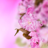Flowers. Beatifull fresh flowers, close-up Royalty Free Stock Images
