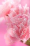 Flowers. Beautiful closeup pink flowers background royalty free stock photo