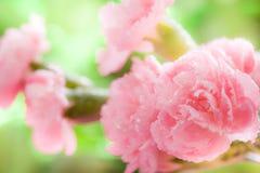 Flowers. Beautiful closeup pink flowers background stock photo