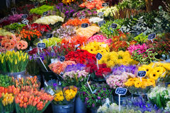 Flowers. Beautiful colorful flowers for sale Stock Photo