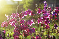 Flowers. Beautiful flowers. Evening and ligth Stock Photo