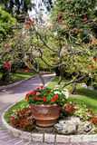 Flowers in the beautiful ,exotic garden in Monaco Stock Images
