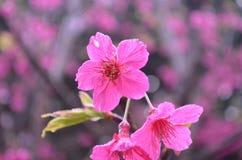 Flowers. Beautiful fresh flowers in garden royalty free stock image