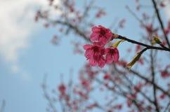 Flowers. Beautiful fresh flowers in garden royalty free stock photos