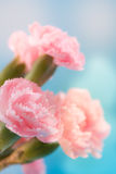 Flowers. Beautiful pink flowers background in nature royalty free stock photo
