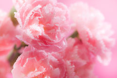 Flowers. Beautiful pink flowers background in nature royalty free stock photography