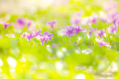 Flowers. Beautiful pink flowers with bokeh background Royalty Free Stock Image