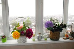 Flowers beautiful room standing on the sill. Of a window stock images