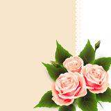 Flowers beautiful  roses and lace Stock Images