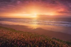 Flowers in beautiful sunset in Sopelana beach. Flowers in beautiful sunset in the Sopelana beach stock photo
