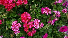 Flowers. Beautiful vibrant colorful bunch of flowers stock photos