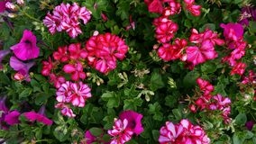 Flowers. Beautiful vibrant colorful bunch of flowers stock photography