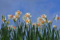 Flowers. Beautiful white flowers in spring season royalty free stock image