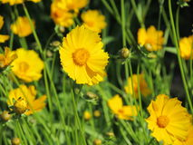 Flowers. Beautiful yellow flowers. they are so good Stock Photo