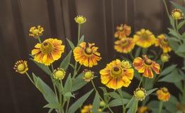 Flowers. Beautiful yellow flowers on metallic fence background Stock Photo