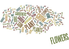 Flowers That Beautify Your Home And Garden Text Background Word Cloud Concept Stock Images
