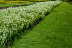 Flowers bed with green grass Stock Photo