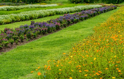 Flowers bed with green grass Royalty Free Stock Images