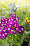 Flowers bed in sunny garden. Flowers bed with pink verbena in sunny garden Royalty Free Stock Photography