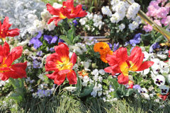 Flowers bed  In Yamashita Park Royalty Free Stock Photo