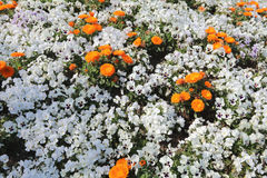 Flowers bed  In Yamashita Park Stock Photo
