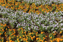 The Flowers bed  In Yamashita Park Royalty Free Stock Images