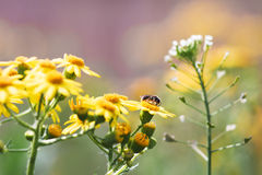 Flowers and bee Stock Images