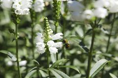 Flowers and Bee Royalty Free Stock Images