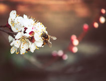 Flowers and bee in the spring Royalty Free Stock Images
