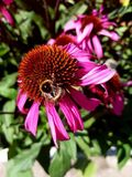 flowers with bee stock photography