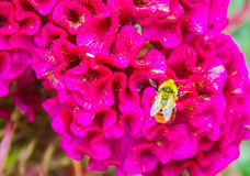 Flowers and bee. A bee working in the colorful flowers Stock Images