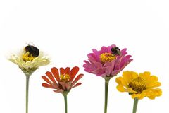 Flowers and bees Royalty Free Stock Image