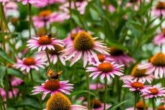 Flowers, bees and butterflies, Prague Stock Photos