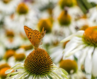 Flowers, bees and butterflies, Prague Stock Image