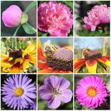 Flowers and bees collage Royalty Free Stock Photo