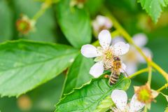 Flowers, bees and many other small creatures stock photography