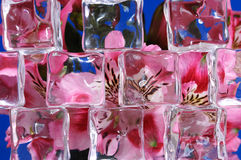 Flowers Behind Ice Stock Photos