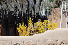 Flowers behind Stone Wall. Yellow flowers behind stone wall in early spring Royalty Free Stock Images