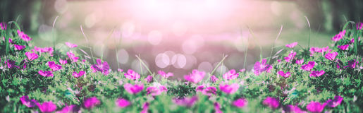 Flowers bells of the field background. Spring landscape.Toning. Stock Image