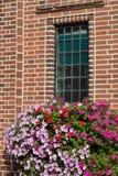 Flowers below window Royalty Free Stock Images