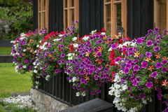 Flowers below the windows of a woodhouse. In the Apls Stock Images