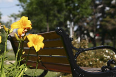Flowers and bench. Park bench with yellow flowers Royalty Free Stock Photo