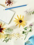 Flowers, berries, salt, empty notebook, pencil on a light background royalty free stock images