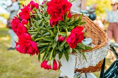 Flowers in a bicycle basket stock images