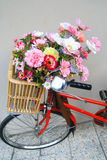 Flowers in bicycle basket Stock Photos
