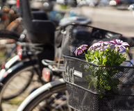 Flowers in the bicycle bin Stock Image